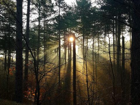 Omgeving Domeinen Schouwen-Duiveland Camping Hakehoeve Ellemeet Renesse